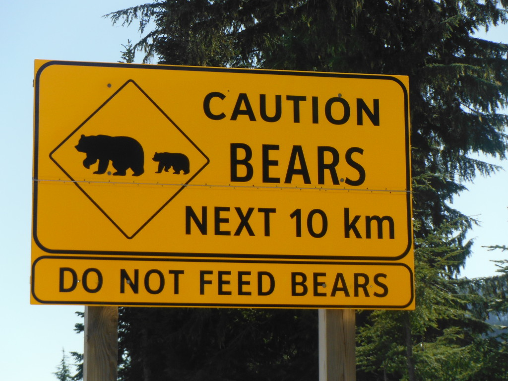 Bear warning signs litter the roads - however we're yet to see one yet!