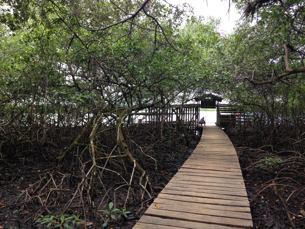 A walk through mangroves to get to the beach